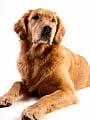 Bezpieczny kontakt z psem