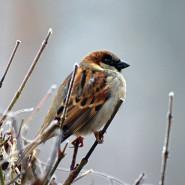 Ptasia stołówka - warsztaty o dokarmianiu ptaków w mieście