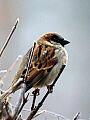 Warsztaty o dokarmianiu ptaków