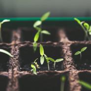 Hodowla roślin tropikalnych - warsztaty i pokaz