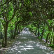 Drzewa w mieście. Jemioła i jej żywiciele