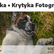 Krytyka Fotograficzna