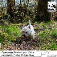 Psi spacer z Fundacją Westy do Adopcji