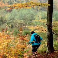 Wędrówka po pełnym historii Lesie Szpęgawskim