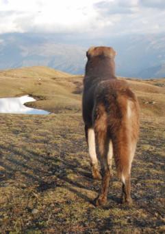 Niezwykły Kaukaz Południowy. Spotkanie ze Stasią Budzisz