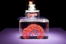 Większość eksponatów stanowią fragmenty ludzkich organów.