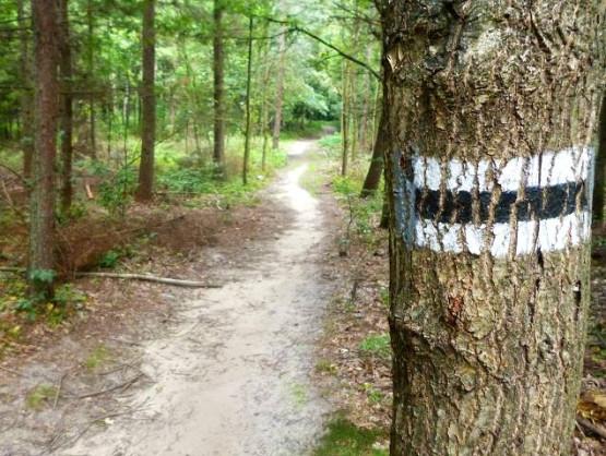 Migawki z wycieczki rowerowej nad Jezioro Przywidzkie