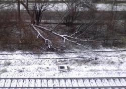 Powalone drzewo leży na torach kolejowych w rejonie ul. Śmidowicza Gdyni. Zdjęcie nadesłane przez pana Piotra.