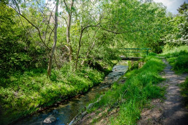 W biegu rzeki Kaczej nie brakuje malowniczych zakątków.