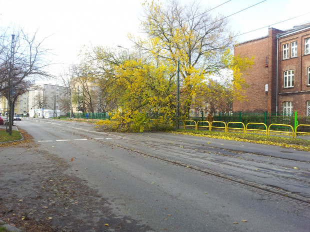 Przewrócone drzewo zablokowało torowisko tramwajowe na Stogach