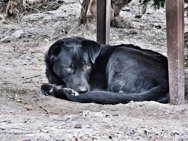 Pierwszy z psów, który codzienne schronienie znajduje pod ogrodowym stolikiem.