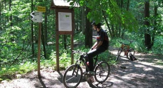 Przeczesywanie Trójmiejskiego Parku Krajobrazowego w poszukiwaniu Kamiennej Twarzy.