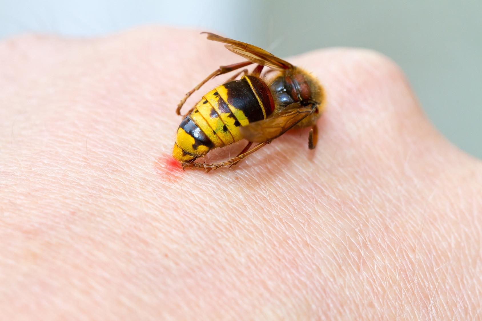 Чем и как лечить укус осы в домашних условиях? 288