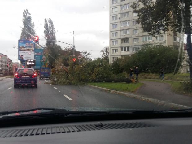 Przewrócone drzewo na al. Grunwaldzkiej we Wrzeszczu.