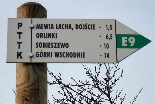 Drogowskaz oznakowanego kolorem zielonym pieszego szlaku Wyspy Sobieszewskiej