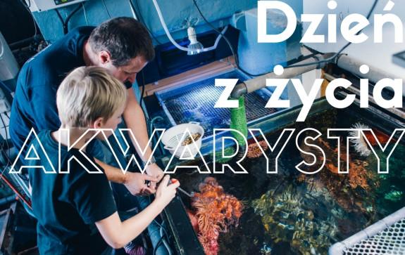 Karmienie ryb w Akwarium Gdyńskim to kolejna z atrakcji do wylicytowania na aukcjach WOŚP.
