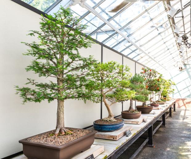 Na świecie powstały liczne stowarzyszenia miłośników bonsai i regularnie odbywają się kongresy jednoczące specjalistów tej dziedziny.