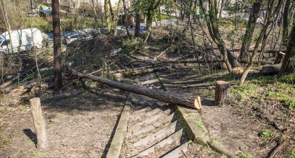 Wycinka części drzew była prowadzona w porozumieniu z urzędnikami. Ma być początkiem porządkowania parku.