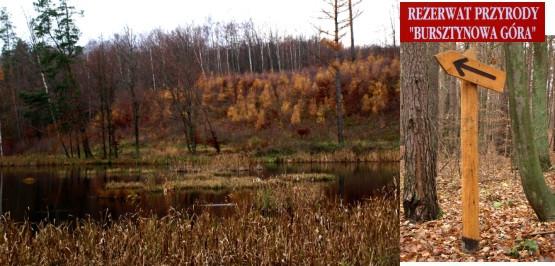 """W okolicy Rezerwatu Przyrody """"Bursztynowa Góra"""" znajduje się kilka pięknie połozonych oczek wodnych"""