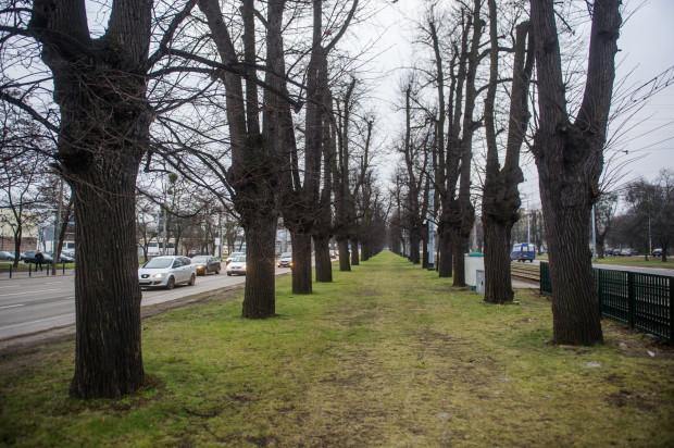 Pierwotnie wzdłuż Wielkiej Alei rosło 1416 lip, sprowadzonych drogą morską z Holandii. Do czasów współczesnych zachowało się 617 drzew, z czego ok. 300 z nich zasadzono w latach 1770-1815.