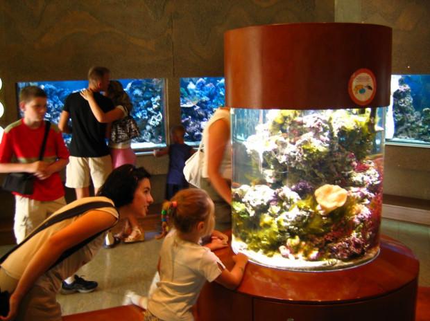 W okresie wakacyjnym gdyńskie akwarium odwiedza 3,5 tys. gości dziennie. Ta liczba zwiększa się w niepogodę.