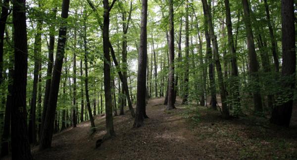 Policjanci natrafili na mężczyznę w tym samym lesie, w którym znaleziono ciało zaginionej gdańszczanki.