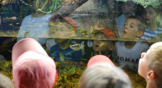 Morze Atrakcji W Akwarium Gdyńskim Akwarium Gdyńskie Akwarium
