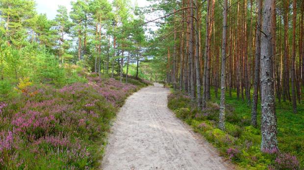 Przepiękne, wiecznie zielone lasy nadmorskie zachęcają do aktywnego wypoczynku