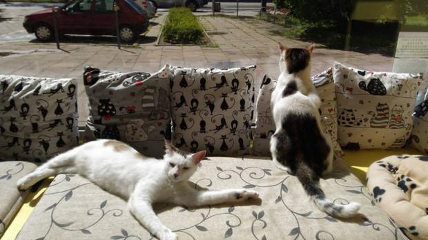 W trosce o koty właściciele kawiarni musieli wprowadzić zakaz wstępu dla małych dzieci.