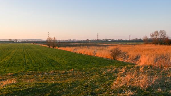 Obszar Żuław oraz południowa część Wyspy Sobieszewskiej mają zachować charakter rolniczy.