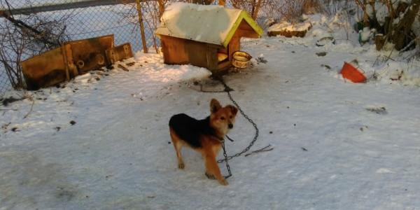 Przy posesji na Rudnikach od miesiąca bez jedzenia i pica przebywał samotnie pies, którego właściciel wyprowadził się do innego miasta.
