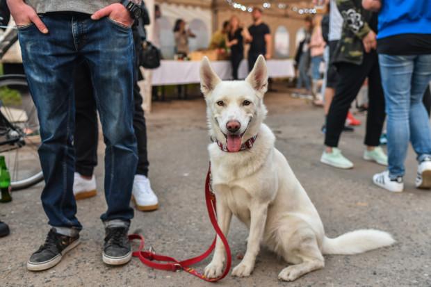 Futrzak Fest, czyli pierwsze takie targi w Trójmieście: wszystko dla miłośników zwierząt i ich pupili.