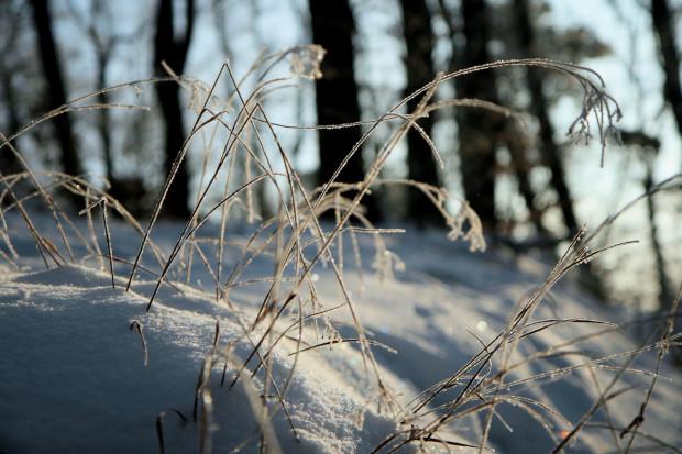 Zimowy wypad do lasu może być wyjątkowo urokliwy, warto jednak pamiętać, że gdy zgubimy się w gęstwinie, to skutki mogą być opłakane.