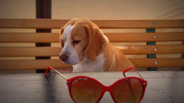 Psy potrafią bardzo głęboko przeżywać rozstanie z właścicielem. Dlatego warto przeanalizować, czy nie ma możliwości, aby pupil wyjechał z nami.