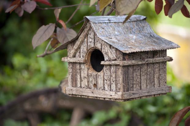Budki lęgowe na drzewach przyciągną głównie sikorki i pliszki. Trzeba jednak pamiętać, że ptaki niechętnie dzielą się terytorium, więc między budkami musi być spora odległość.