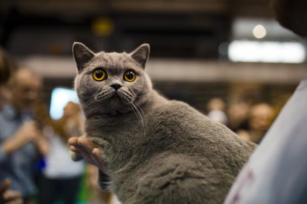 Pamiętajmy: każde kocie zachowanie ma swoją przyczynę.