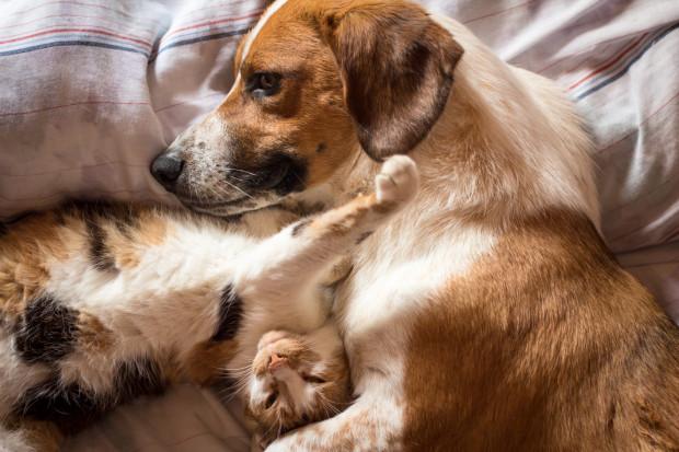Pies i kot to odwieczni wrogowie? Nie do końca...