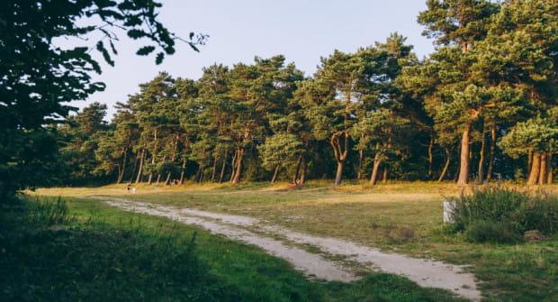 Jedną z polan, które będą rewitalizowane będzie teren na Babich Dołach.