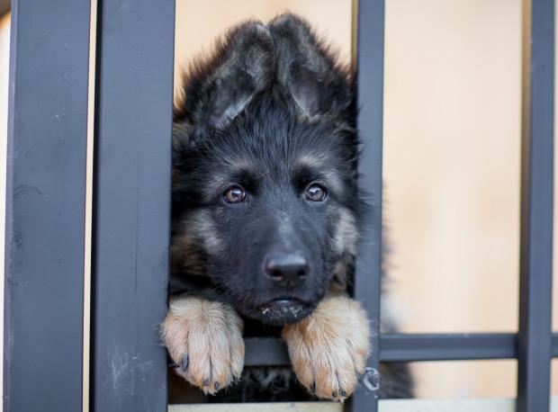 Posiadanie psa lub kota nie musi wiązać się z wyrzeczeniem w postaci rezygnacji z wyjazdu - wystarczy odpowiednio wcześniej zainteresować się organizacją opieki dla czworonoga. Możliwości jest wiele, wystarczy chcieć.