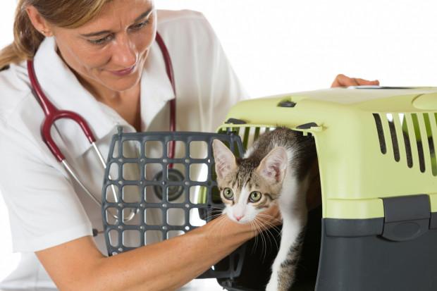 Kot musi czuć się bezpiecznie i swobodnie w transporterze.
