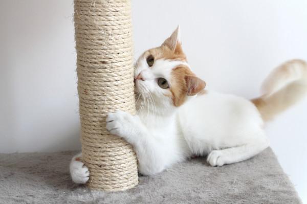 Solidny drapak może pomóc ograniczyć drapanie oraz stać się atrakcją dla kota.