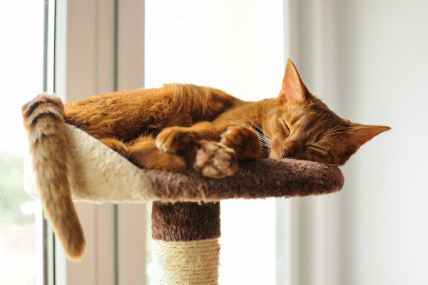 Gdyby to zależało od twojego kota, wybrałby drapak wykonany z drewna i elementów miękkich, np. linki sizalowej oraz stosunkowo wysoki.