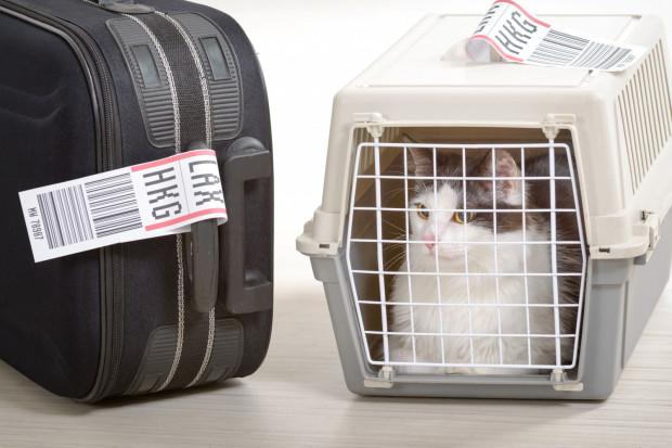 Jeśli podróżujemy ze zwierzęciem jako bagażem podręcznym, podczas całego lotu zwierzę musi podróżować w transporterze lub specjalnej torbie, które podczas startu, lądowania i w czasie turbulencji pozostają pod fotelem pasażera.