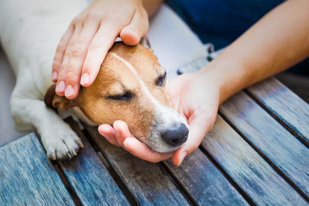 W razie wypadku, w którym ucierpiał pies lub kot, możemy i powinniśmy udzielić zwierzakowi pierwszej pomocy.