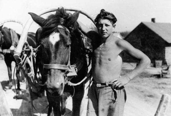 Dlaczego koń, ciągnący na co dzień furmankę należącą do gdyńskiej firmy Korab, musiał chodzić po mieście w butach? Odpowiedź na końcu artykułu. Zdjęcie z Ilustrowanego Kuriera Codziennego z 1937 roku.