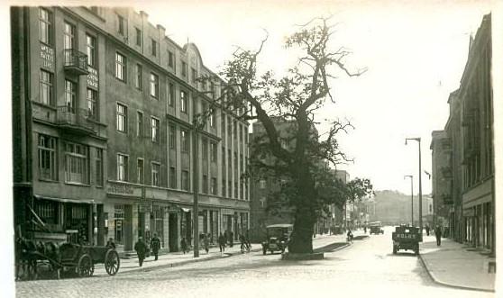 Przedwojenna pocztówka z dębem stojącym pośrodku ul. Portowej w Gdyni.