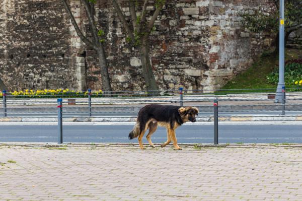 W razie zaginięcia psa należy przygotować ogłoszenia nie tylko do porozwieszania na ulicy, lecz także do publikacji w internecie.