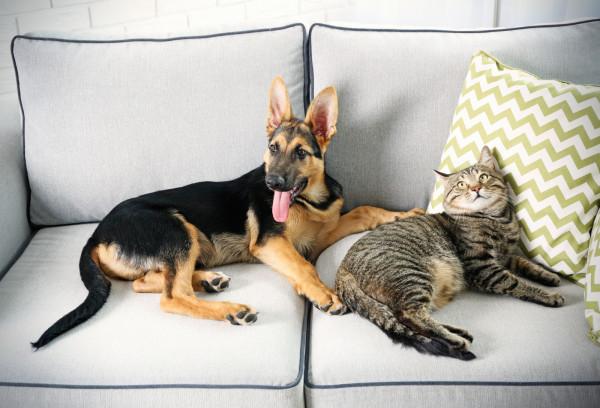 Zwierzaki kochają wypoczywać na kanapie. Zadbajmy, by ich relaks nie psuł naszego...
