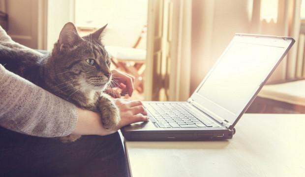 Choć koty nie mogą głosować w budżecie obywatelskim, to ich właściciele z pewnością słuchają się swoich podopiecznych i wybierają projekty, które mają poprawić warunki bytowe tych zwierząt.