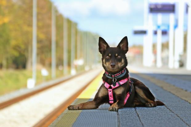 Większość pasażerów jest bardzo przychylna w stosunku do podróżującego psa, choć zdarzają się wyjątki.